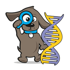 DNA test hond